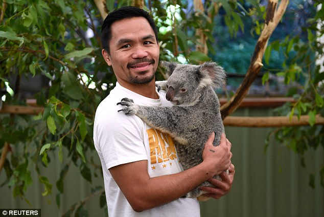 Manny Pacquiao goes on a Wild walk, Poses With Koala Bear