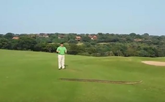 Giant python slithers across a South African golf course in front of startled players