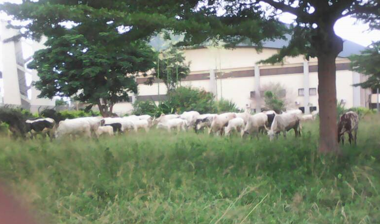 National Stadium Abuja, Package B littered with Cow Dung, Animals roam Freely